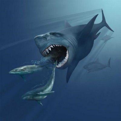 Megalodon 8 Binatang Terbesar Sepanjang Sejarah