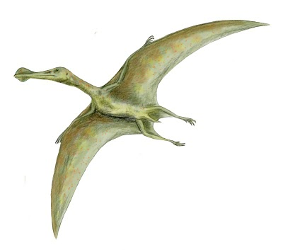 Ornithocheirus BW 8 Binatang Terbesar Sepanjang Sejarah